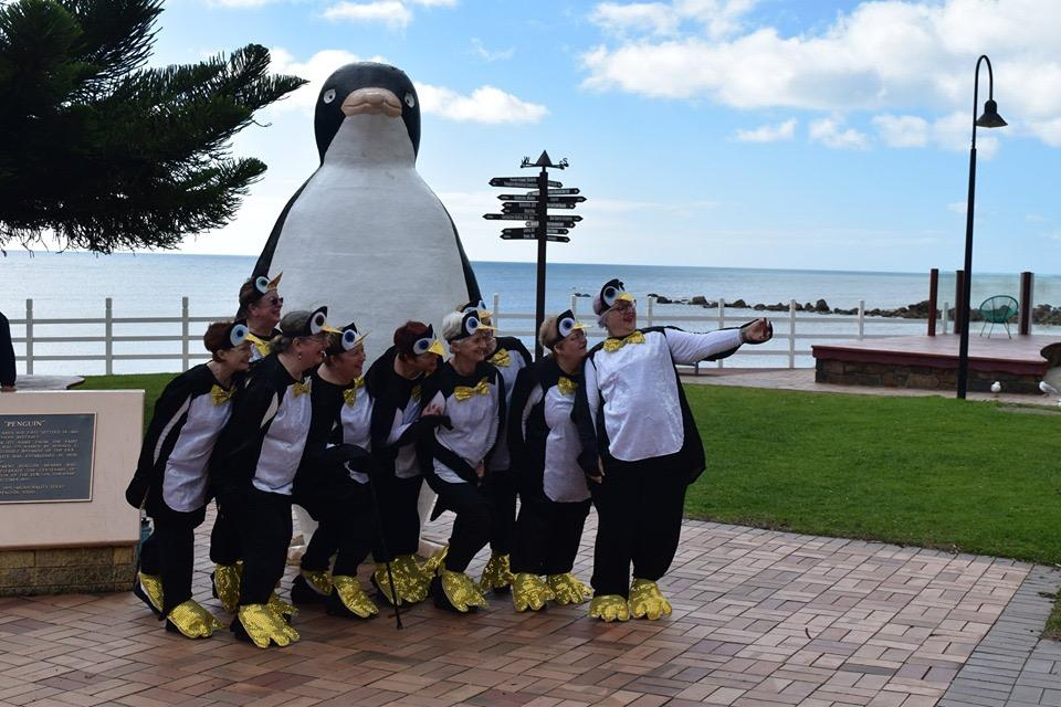 Penguin Waddle in Tasmania